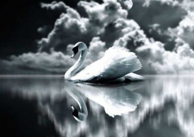 The Swan (piano)