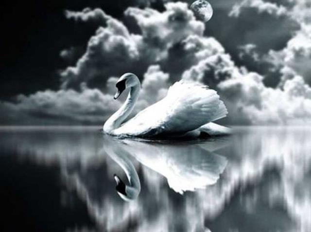 The Swan (piano)